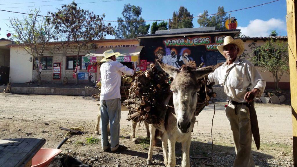 men with burros and firewood in soledad etla oaxaca mexico