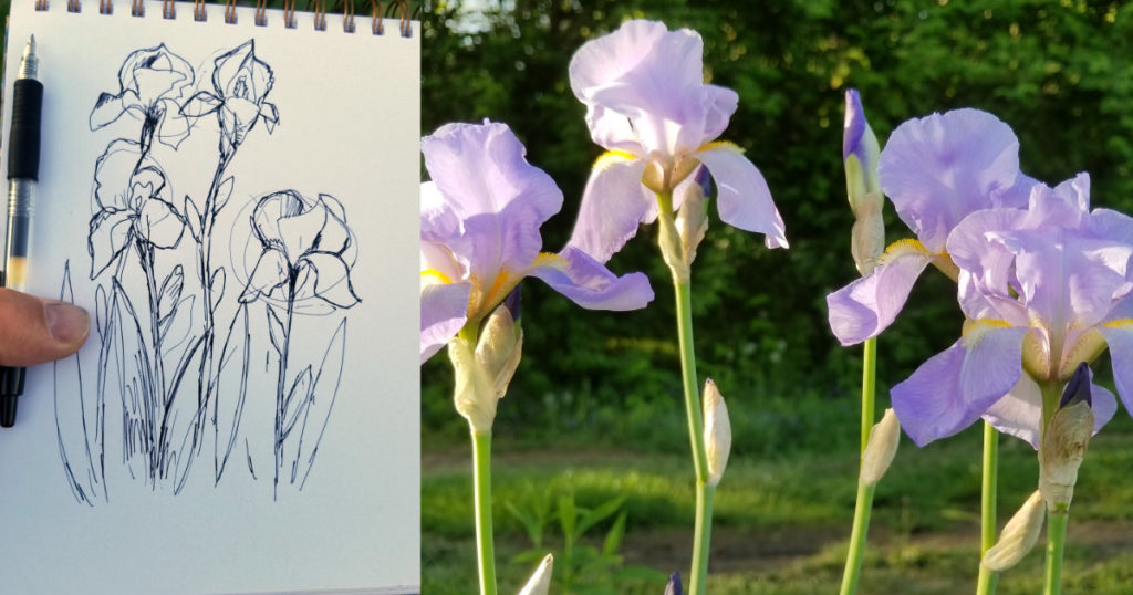 drawing of iris flowers